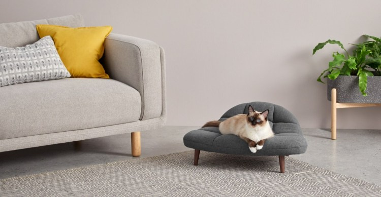 PET CHECK UK - Cat modelling on cat bed