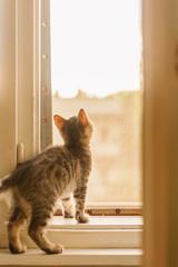 Cat inside home