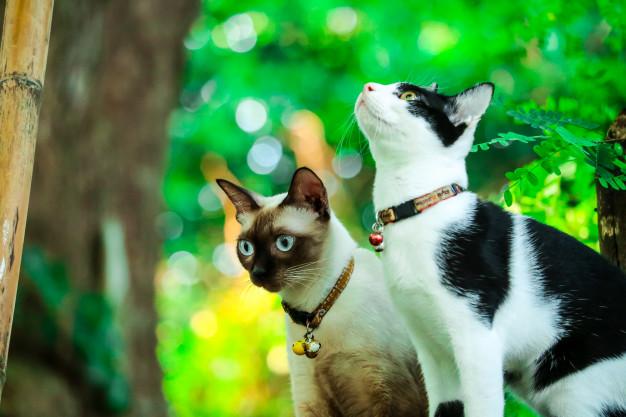 PET CHECK UK Siamese cats exploring a tree