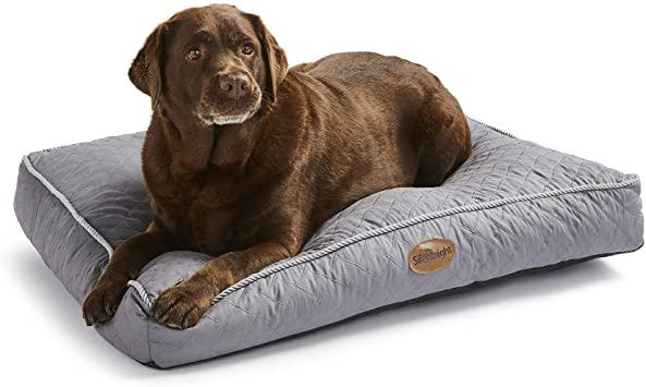PET CHECK UK Dog lying on dog bed