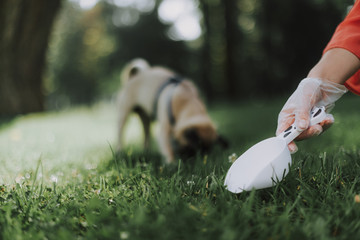 PET CHECK UK - Dog Poop - dog poop being scooped