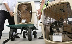 Dog cargo handled at airport