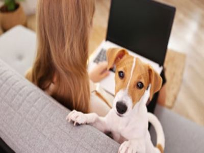 PET CHECK UK - Business - Lady sitting using laptop with dog near by