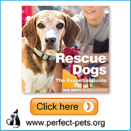 PET CHECK BLOG Perfect Pets Banner About Rescue Dogs