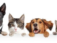 PET CHECK UK Group of cats and dogs