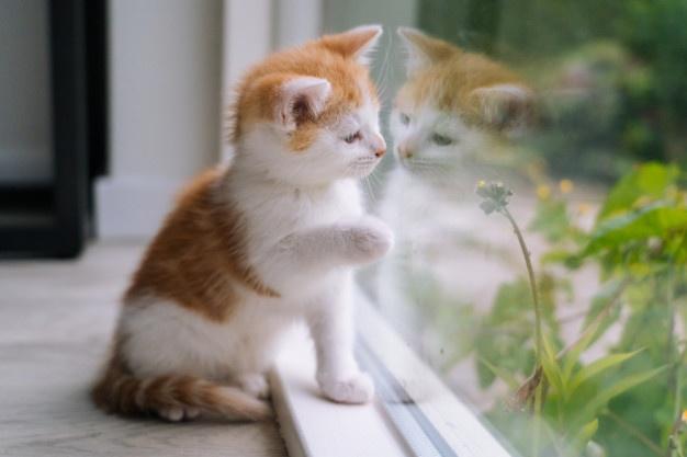 Kitten by the window