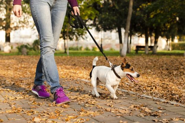 PET CHECK UK - Dog Walking - Lady and dog walking
