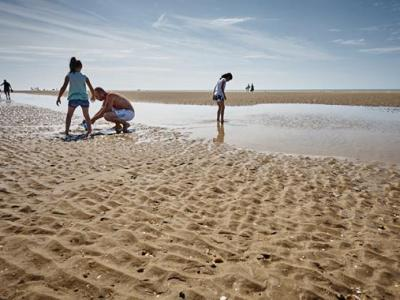 PET CHECK UK Camber Sands beach East Sussex