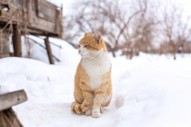 3 Tabby cat in snow