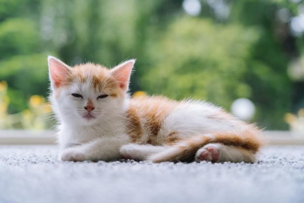 Kitten sitting on carpet