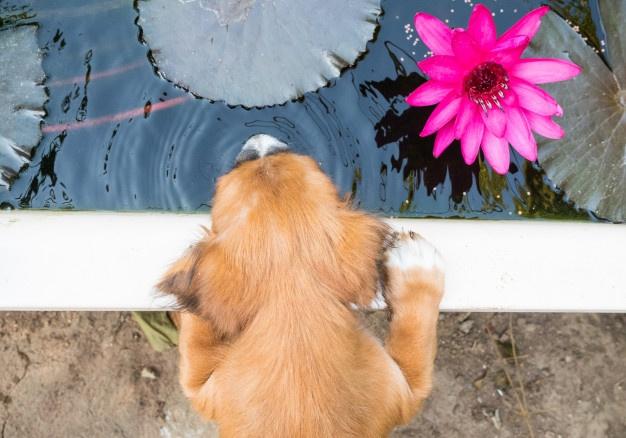 PET CHECK UK Puppy in garden drinking pond water
