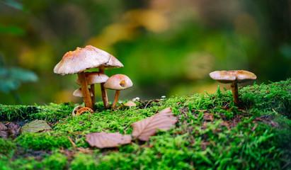PET CHECK UK wild fungi