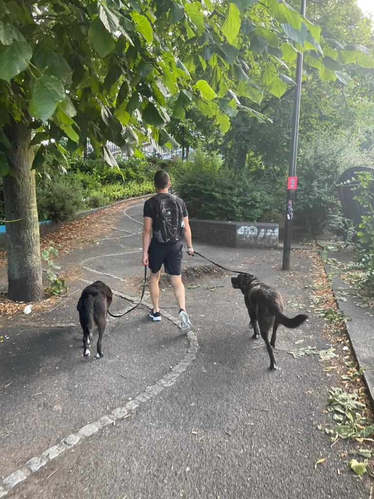 PET CHECK UK - Dog walking - Man with 2 dogs