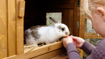 PET CHECK UK Small girl with a rabbit in a hutch