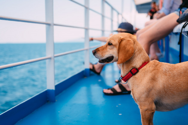 Dog travelling on ferry