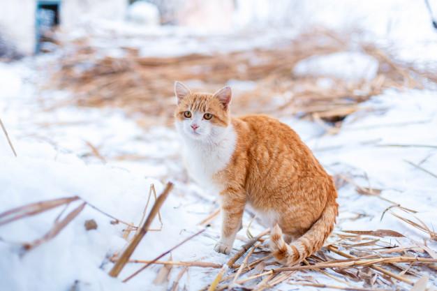 2 Tabby cat in snow