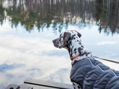 PET CHECK UK - Dog walking - dog by lake