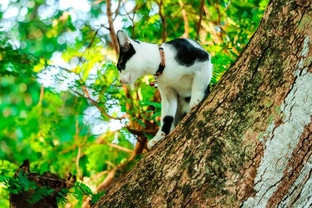 PET CHECK UK Siamese cat exploring a tree