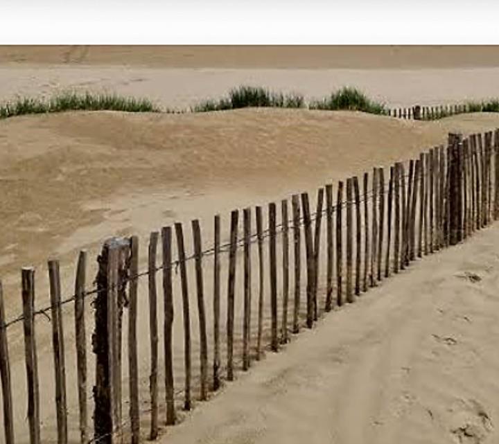 PET CHECK UK Greatstone, Kent, Sandy beach