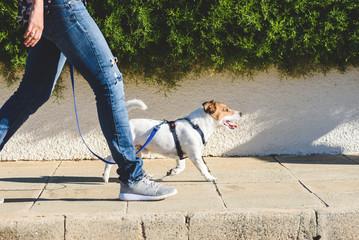 dog walking in a city