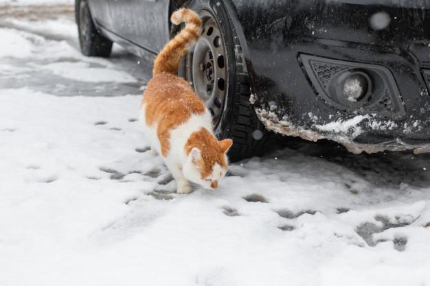 Cat hide under cars