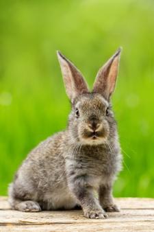 Grey rabbit standing still