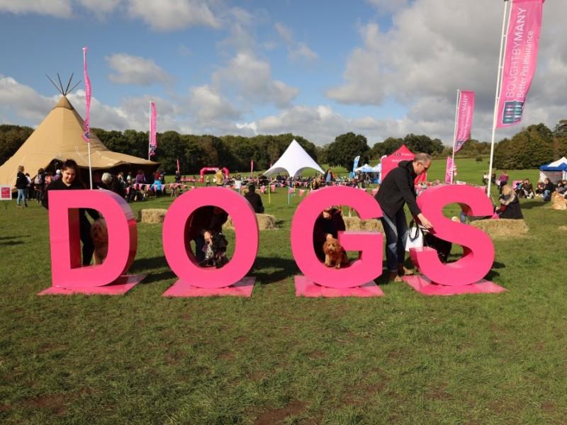 PET CHECK UK Big Dog Walks 'Dogs' sign