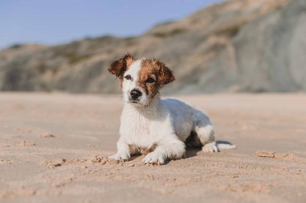 PET CHECK UK - Coastal Walks - Wet dog on sitting on beach after swim