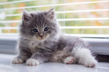 Kitten sitting on the window sill