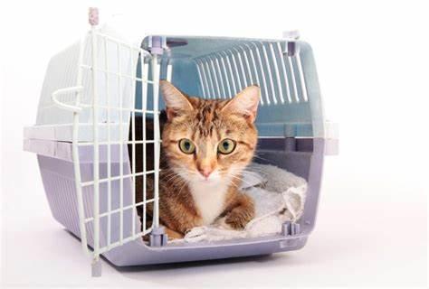 PET CHECK UK Cat in crate