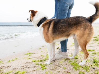 PET CHECK UK - Dog walking - Dog and owner by the sea edge