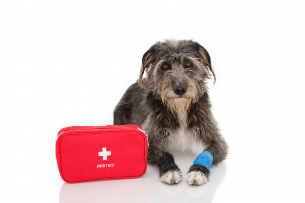 PETCHECK UK Dog with a bandaged sore foot and first aid box