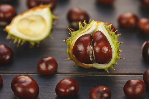 PET CHECK UK open conkers poisonous to pets