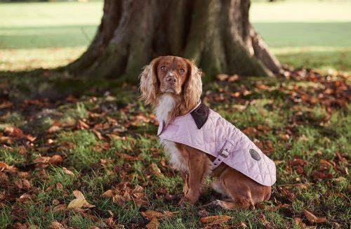 PET CHECK UK Dog wearing jacket